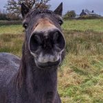 a cheeky nose!