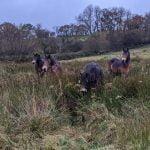 our Exmoor girls arrive