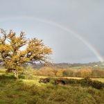 auspicious welcoming rainbow