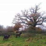 the girls & the oak